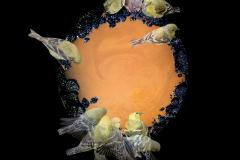 birdbath_final_merged