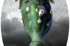 poppy_head2