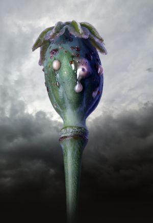 Poppyhead No.4