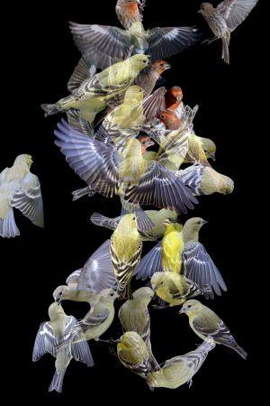 Finches No. 2