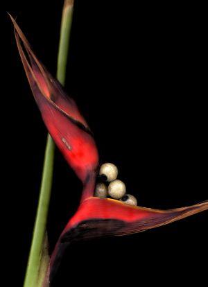 Florescence No.2