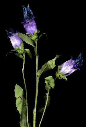 Florescence No.4