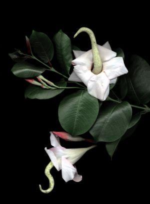 Florescence No.8