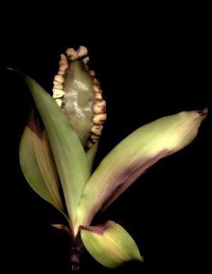 Florescence No.9