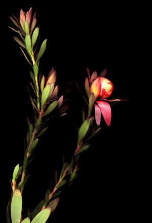 Florescence No.10