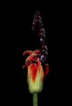 Florescence No.11