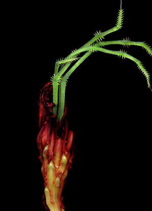 Florescence No.14