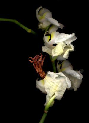 Florescence No.16